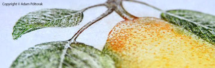 miedzioryt copperplate gruszka pear